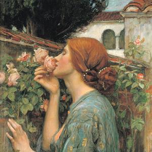 my-sweet-rose