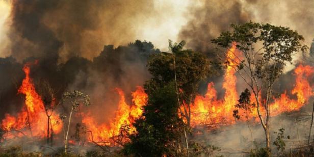 amazonas-flames.png